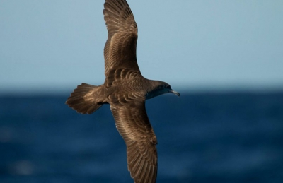 Monitoring seabirds for ocean health