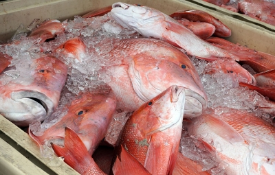 Proposed Ban on Red Snapper Exports in Seychelles