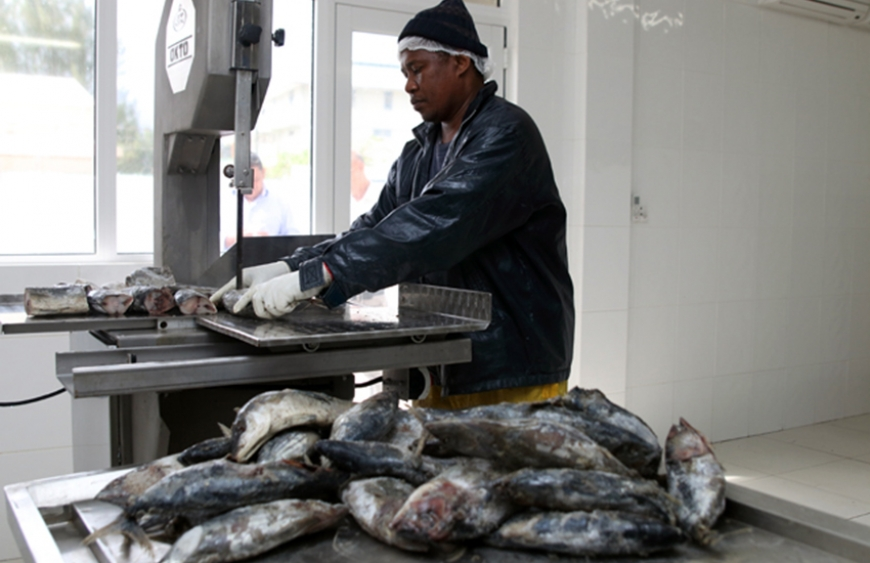 An Amirante Fisheries employee cutting up fish for processing. (Joe Laurence, Seychelles News Agency)