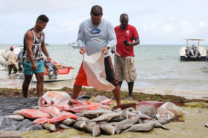 The initiative will help maintain the fish stock in the area to give ample time for the fish stock to grow. (Romano Laurence, Seychelles News Agency) Photo License: CC-BY