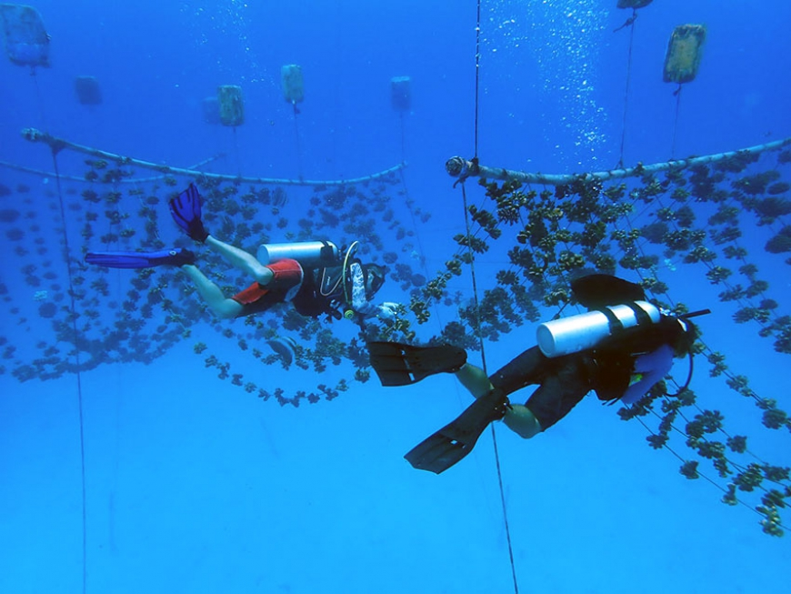 Coral nurseries – preparing corals for the reef