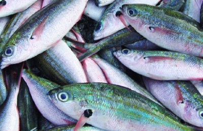 Successful roll-out of Praslin coastal fishery plan is a disruption of the business-as-usual model