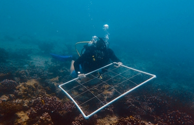 Paul Anstey (Reef Rescuers) carefully positioning a 1 m x 1 m quadrant, used to survey coral recruitment on the reef.