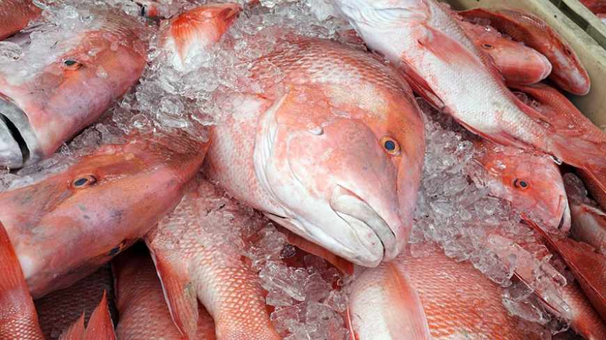 Seychelles Nation: Decision to ban export of Red Snapper revised