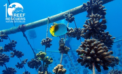 Nature Seychelles' Reef Rescuers celebrated a decade of action