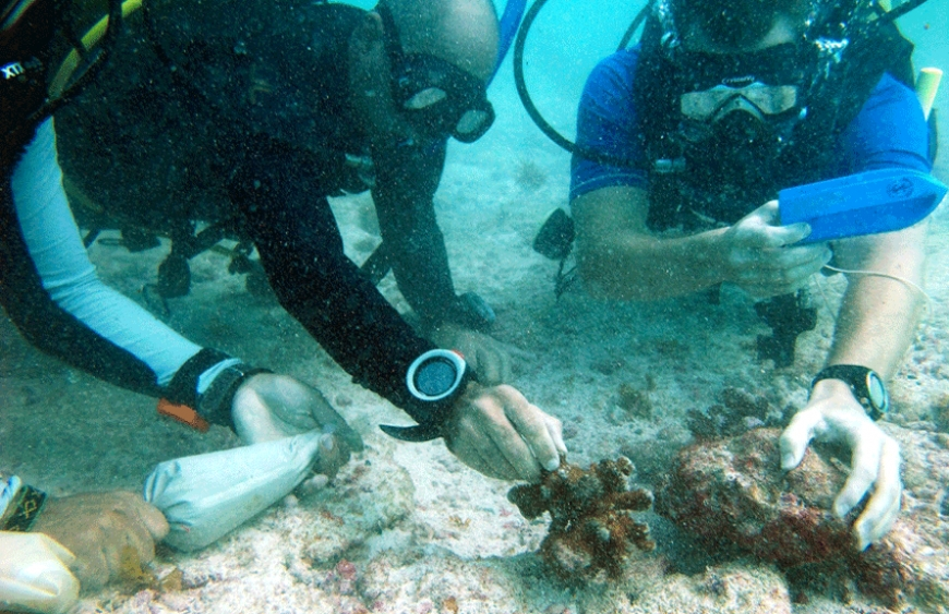 First ever Coral Reef Restoration Training program in Seychelles launched