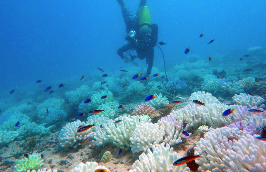 2016 coral-bleaching event: One year later...