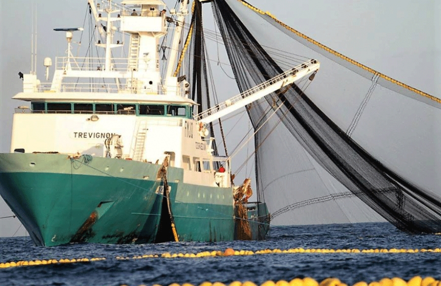 The Frenach and Spanish purse seiners fish for tuna species in the Indian Ocean